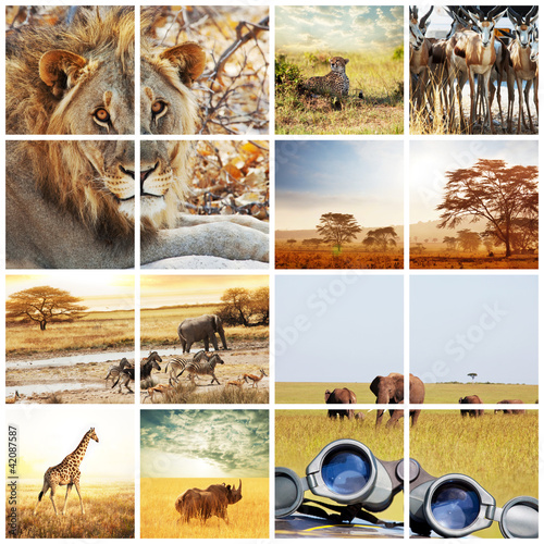 Fototapeten,collage,saeule,afrika,tier