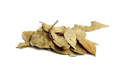 Bay Leaves isolated on white background. Also called bay laurel