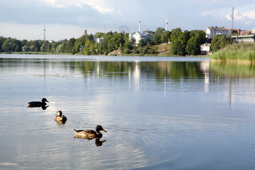 Ducks in peaceful atmospherein Töölölahti bay, Helsinki, Finland