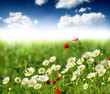 Fototapeten,wildblume,wiese,landschaft,blütenstand