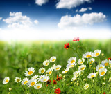 Fototapety Summer wildflowers