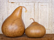 Two amish gourds sitting on wood plank