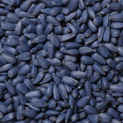 Seed treater, macro sunflower seeds texture