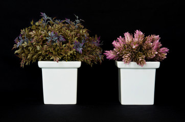 Basil and pink ginger herb on black isolation background