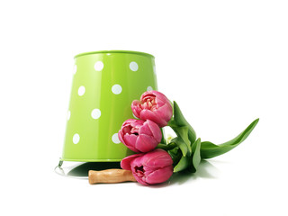 Tulips with bucket