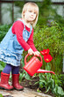 Child watering tulip in the garden