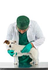 Visita veterinaria cardiologica