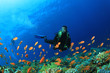 Scuba Diver swims through tropical fish on coral reef - 42115932