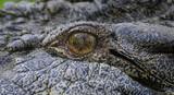 Eye of Saltwater Crocodile Australia poster