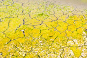 Rift Soil