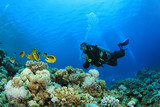 Scuba Diver and Butterflyfish on coral reef