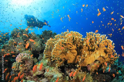 Leinwandbild Motiv Coral Reef, Tropical Fish and Scuba Diver