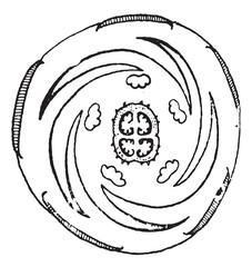 Jimsonweed or Datura stramonium, vintage engraving.