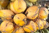 grappe de cocos