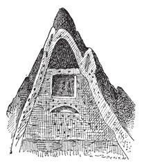 Termite nest, vintage engraving.