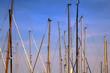 Masten von Segelbooten,Hafen von Eckernförde, Schleswig-Holstei