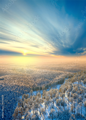 Top view on winter forest on the morning