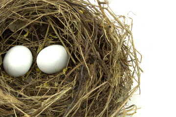 Bird nest and eggs on white background