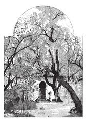 Petit Marabou of Algeria, vintage engraving
