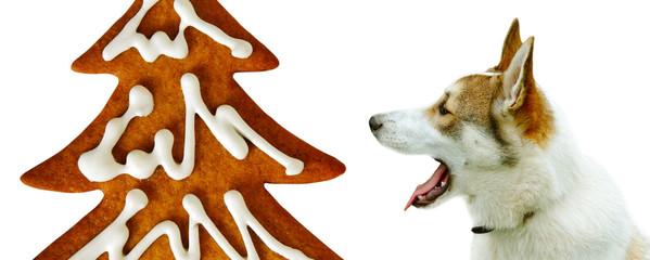 Purebred dog and cracker.