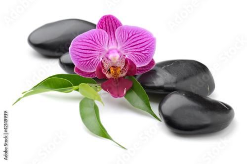 Fototapeten,kurort,massage,orchidee,bambus