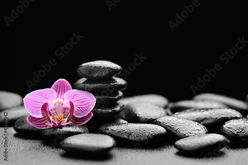 Fototapeten,steine,kurort,zen,blume