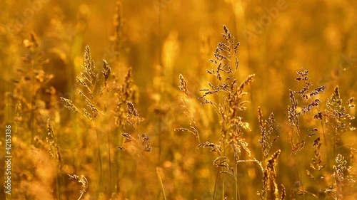 Grass landscape in the wonderful sunset light