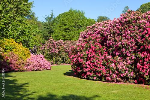 rozanecznik-i-azalia-krzewy-w-pieknym-ogrodzie-letnim