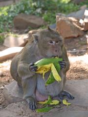 mango fressender affe