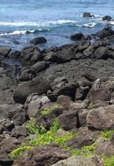 coast of jeju island korea