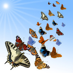 Gruppe verschiedener Schmetterlinge