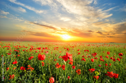 Foto op Canvas Poppy field with poppies