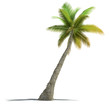 Palm tree rendering
