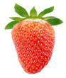 Single strawberry fruit