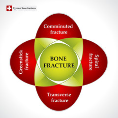 Types of bone fractures. Colorful chart