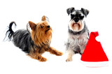 Two cute lovable pets poster