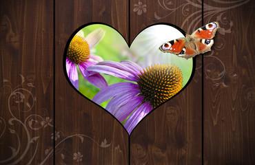 Herzloch in Holzwand mit Schmetterling und Echinacea