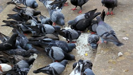 Feed Pigeon on Stairs