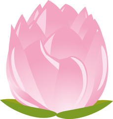 illustration of sigle pink lotus(waterlily)