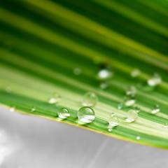 Les perles de pluie