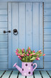 Spring tulips outside garden shed
