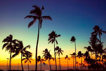 やしの木と夕焼け空
