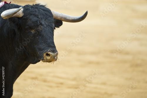 In de dag Stierenvechten Toro bravo en la arena de la plaza.