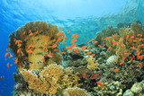 Underwater Coral Reef poster