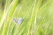 Butterfly on a blade of grass in a spring morning