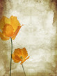 Pretty, orange, poppies grungy background