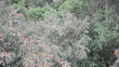 Bäume im Gewitter