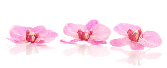 Beautiful orchid flowers isolated on white