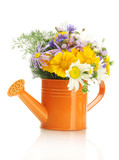 Fototapety bouquet of wildflowers in watering can isolated on white