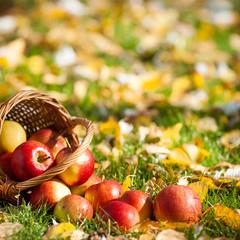 Red apples in basket